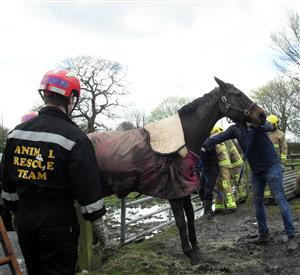 Horse rescued from gate