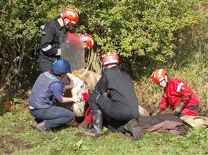 Firefighters rescuing a horse from a ditch