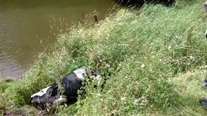 Cow stuck in mud on riverbank