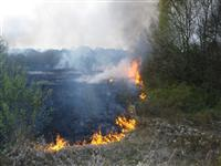 Grass fire spreading